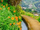 Flowers, Levada and landscape in Madeira.